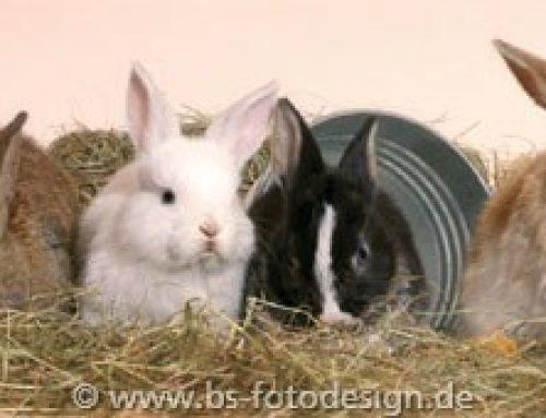 Schnupfen beim Kaninchen