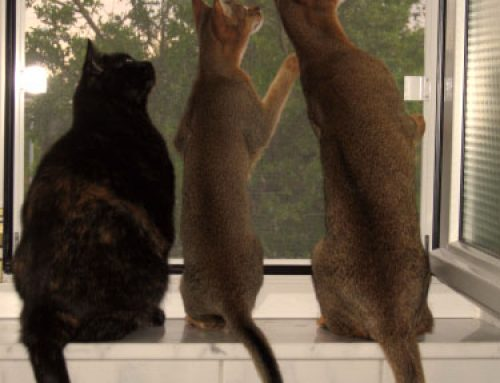 Die 3 von der Fensterbank